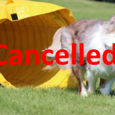 *Cancelled* KAOS Dog Sports - Outdoor Agility Fun Match