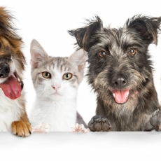 Responsible Pet Ownership Bylaw Survey